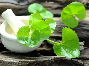Brahmi (Bacopa Monnieri) For Alzheimer's Disease