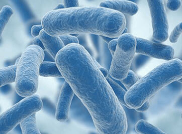 What Are The Effects Of Antibiotics On Probiotic Bacteria?