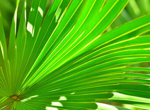 saw palmetto for pcos